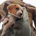 ¿Con quién dejo a mi mascota cuando me voy de viaje?